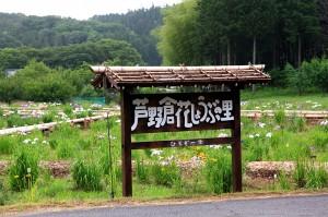 芦野倉花菖蒲園まつり1