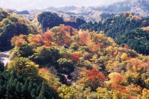 袋田の滝・月居山コース