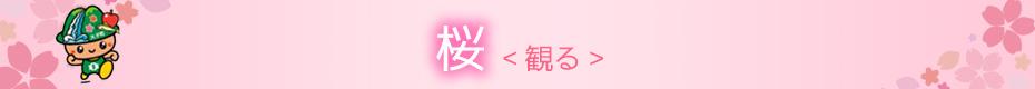 桜-観る-