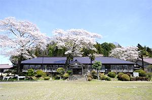旧上岡小学校の桜