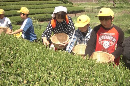 茶摘み体験