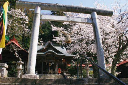 十二所神社の桜