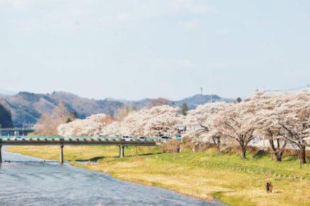 久慈川桜並木