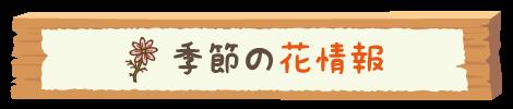 まんきつ秋_花情報