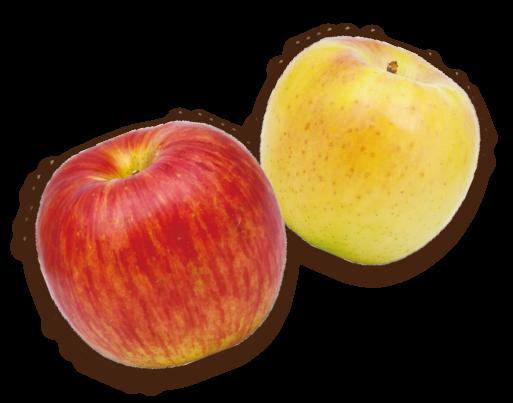 りんごイメージ1